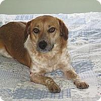 Adopt A Pet :: Freckles - Flowery Branch, GA