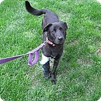 Adopt A Pet :: Kit Kat - Southampton, PA