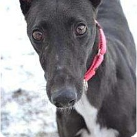 Adopt A Pet :: Goody (Where's Goodness) - Chagrin Falls, OH