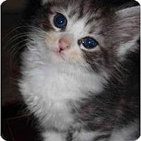 Adopt A Pet :: Tiny - Modesto, CA