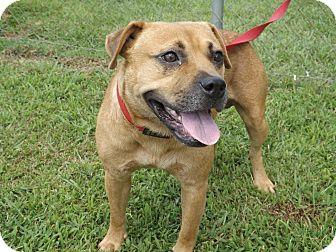 American Bulldog Mix Dog for adoption in Thomaston, Georgia - Yosemite