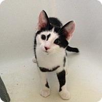Adopt A Pet :: Apple - Port Republic, MD
