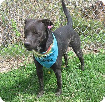Terrier (Unknown Type, Medium)/Labrador Retriever Mix Dog for adoption in Flint, Michigan - Cooper - Adopted