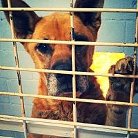 Adopt A Pet :: Sig - Odessa, TX