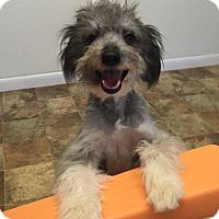 Adopt A Pet :: Dash - Indian Trail, NC