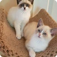 Adopt A Pet :: Bandit and Teddy - Fairfax, VA