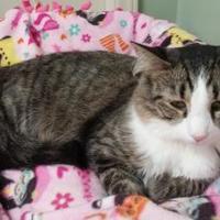 Adopt A Pet :: Abby - Erie, PA