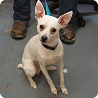 Adopt A Pet :: Antonio - Aurora, IL