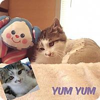 Adopt A Pet :: Yum Yum - Harrisville, WV