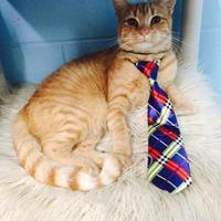 Adopt A Pet :: Garfield - Clarkesville, GA