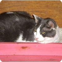 Adopt A Pet :: Duncan - Cleveland, OH
