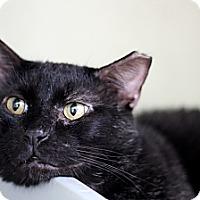 Adopt A Pet :: Koopa - Chicago, IL