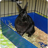 Adopt A Pet :: Emma - North Gower, ON