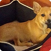 Adopt A Pet :: 'ROSEMARY' - Brooksville, FL