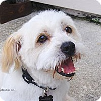 Adopt A Pet :: Mavrick - Jacksonville, FL