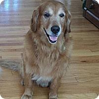 Adopt A Pet :: Bogie - Murdock, FL