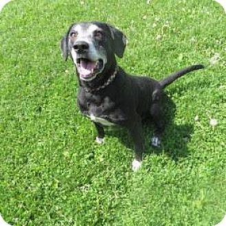 Retriever (Unknown Type)/Labrador Retriever Mix Dog for adoption in Janesville, Wisconsin - Omar