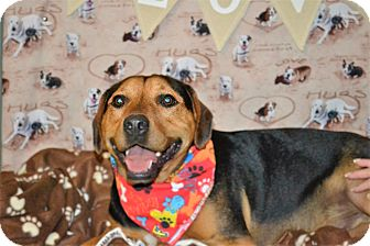 Hound (Unknown Type) Mix Dog for adoption in Okeechobee, Florida - Buster