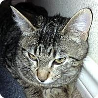 Adopt A Pet :: Fergus - College Station, TX