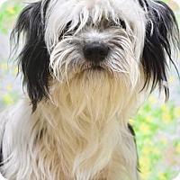 Adopt A Pet :: Checkers - Dublin, CA