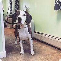 Adopt A Pet :: Sally - Sinking Spring, PA