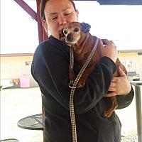 Adopt A Pet :: Gia - Creston, CA
