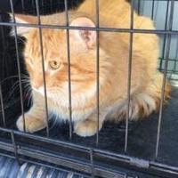 Adopt A Pet :: Cat Ball - Kyle, SD