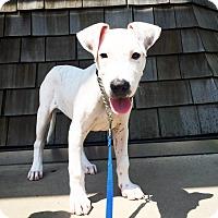 Adopt A Pet :: Luke - Warrenville, IL