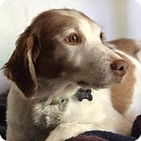Adopt A Pet :: CO/WY/Libby - Seattle, WA