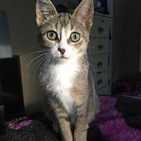 Adopt A Pet :: Zara - Flushing, MI