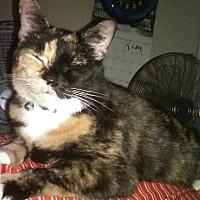 Adopt A Pet :: Torrie - Goldsboro, NC