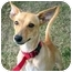 Photo 3 - Chihuahua/Whippet Mix Dog for adoption in San Pedro, California - Giselle