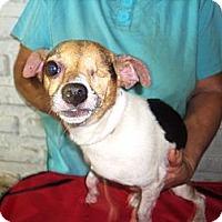 Adopt A Pet :: Allison - Orlando, FL