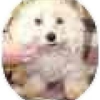 Adopt A Pet :: FRANKLIN - Georgetown, KY