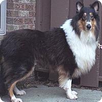 Adopt A Pet :: Morgan - Minneapolis, MN