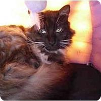 Adopt A Pet :: Theo - El Cajon, CA