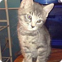 Adopt A Pet :: Thomas - Piscataway, NJ