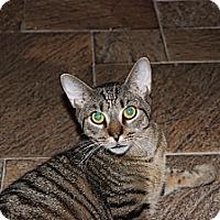 Adopt A Pet :: Bedford - Secaucus, NJ