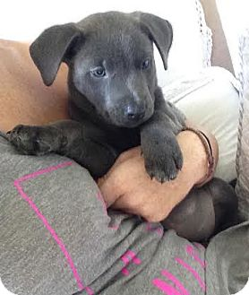Hound (Unknown Type) Mix Puppy for adoption in Jacksonville, Florida - Quinn