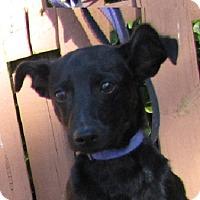 Adopt A Pet :: Onyx - Oakland, AR