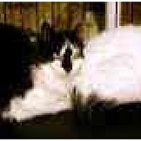 Adopt A Pet :: Barn Cats! - Trexlertown, PA