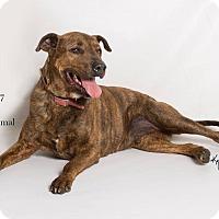 Adopt A Pet :: MAVERICK - Corona, CA