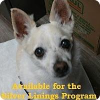 Adopt A Pet :: Nora - San Diego, CA