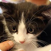 Adopt A Pet :: Biscuit - Temecula, CA