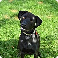 Adopt A Pet :: Camas - Salt Lake City, UT