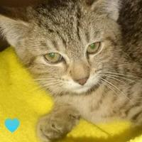 Adopt A Pet :: Tracey - Greenville, KY