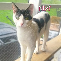Adopt A Pet :: Nixi - York, PA