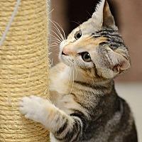 Adopt A Pet :: Jazzy - Tampa, FL
