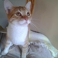 Adopt A Pet :: Destiny - Rochester, MN
