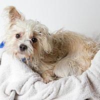 Adopt A Pet :: *COLBY - Sacramento, CA